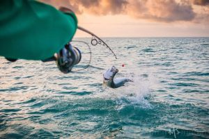 Sanibel flats fishing guide